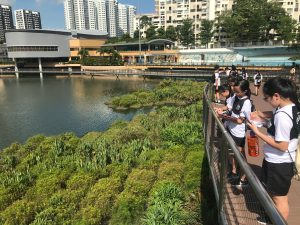 Humanities-Maths Trail at Pang Sua Pond - Testing of observation skill via sketching